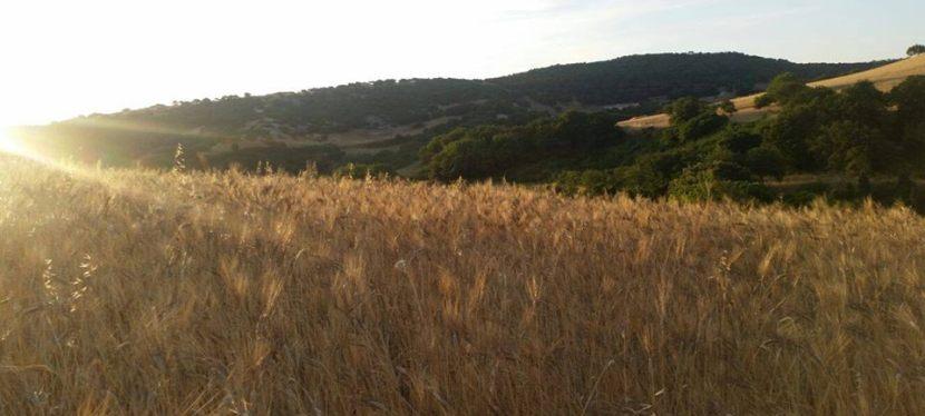 Experience Sardinien CSR